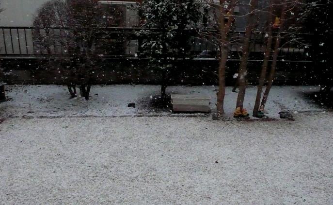 P1060336_snow_a