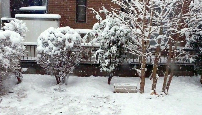 P1060343_snow_b